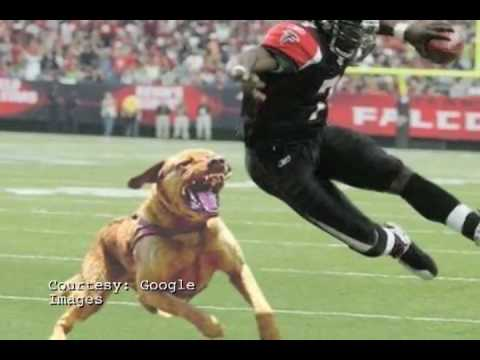 What should Michael Vick Do? A Poll