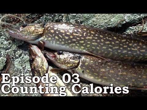 Beyond Survival | The Wilderness Living Challenge 2016 S01E03 - COUNTING CALORIES