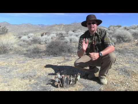 Wild Edible Plants Beavertail Cactus, Wilderness Survival Skills