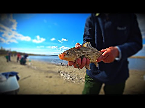 ВОСКРЕСЕНЬЕ В КАМЫШАХ, ЗМЕЯ ПОД СТУЛОМ, рыбалка, рыбалка 2020, природа, песня под гитару. карпфишинг