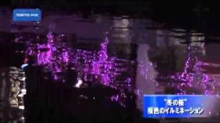 桜の名所として知られている目黒川沿いで、LEDによる桜色のイルミネーションが登場しました。 まるで春に咲く桜のようにおよそ400メートルに...