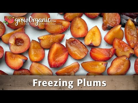 Get How To Freeze Plums Images