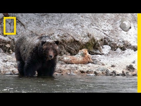 """It Really Wasn't the Bear's Fault"": Grizzly Attack Survivor Reflects 