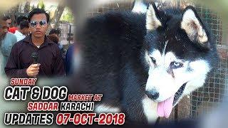 Dog & Cat Market Saddar Karachi 7-10-2018 latest Updates (Jamshed Asmi Informative Channel)