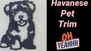 Havanese Grooming: The Puppy Trim