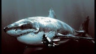 Мегалодон жив !!!Самая большая акула в мире !!!!