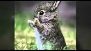 Милые животные 🐶  [картинки]