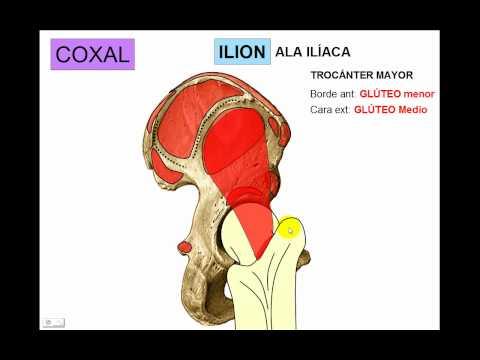 OSTEOLOGIA DE MIEMBRO INFERIOR 1 - YouTube