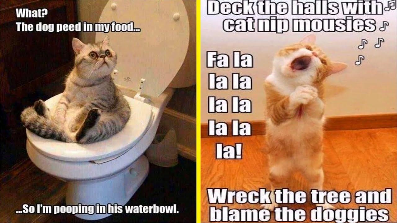 funny-examples-of-cat-logic-fails