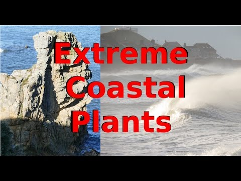 Plants In Extreme Locations (Coast)