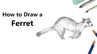 How to Draw a Ferret with Pencil [Time Lapse]