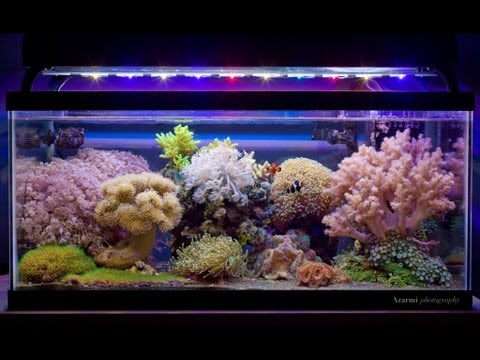 nano reef tanks youtube. Black Bedroom Furniture Sets. Home Design Ideas