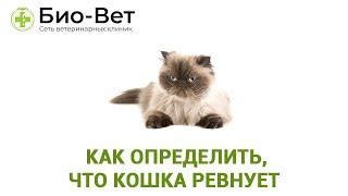 Ревнуют ли кошки & Как определить, что кошка ревнует. Ветклиника Био-Вет