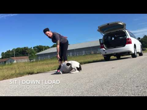 "6 Month German Shorthaired Pointer ""Suzie"" 