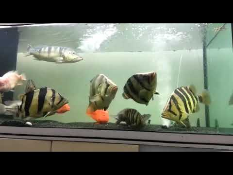Kolkata Aquarium Fish Market Youtube