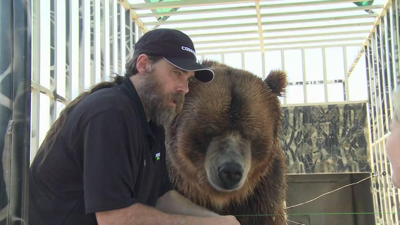 Celebrity bears jc inc