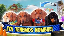 ExtraPolinesios-BATALLA-POR-EL-NOMBRE-DE-LOS-PERRITOS-NUEVOS-LOS-POLINESIOS-RETO