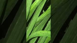 Beautiful Palm Tree PHOTOSHOOT!! (FASHION!) (CLOSE UP!)