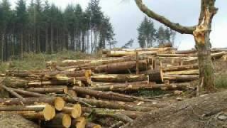 Deforestation Ft. Kalikasa'y Gaganda