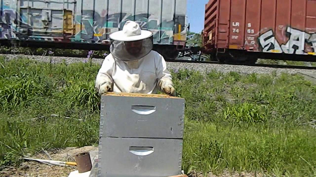 beekeeping 2016 hive inspection train u0026 it u0027s all about the bee u0027s