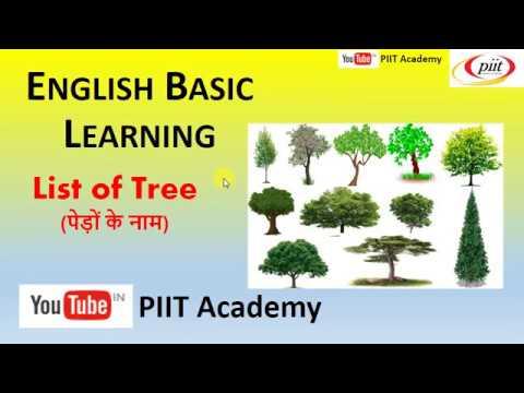 Tree Name For Nursery Lkg Ukg English Learning Hindi