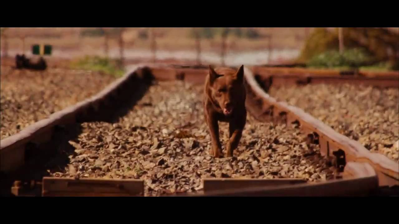 Red Dog Movie Trailer