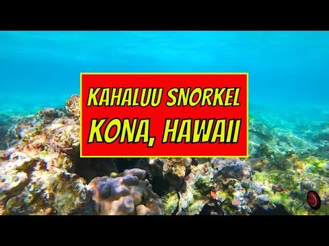 Kahaluu Snorkel - Kailua Kona, Hawaii - Christmas Vacation 2018