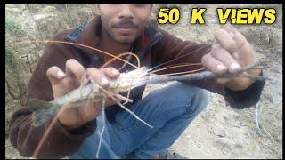 Fishing চিংরি Santipur Ganga Westbengal India Nadia
