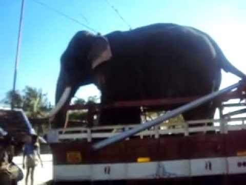 Chulliparambil Vishnushankar getting down from lorry