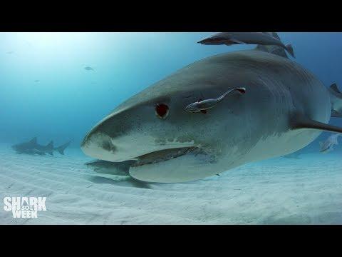 The Top 30 Sharks of Shark Week: Part One