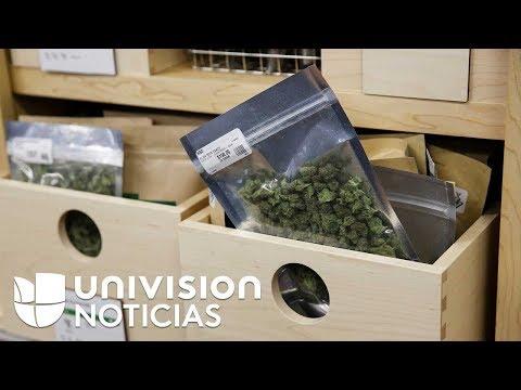 California se convierte en el mercado legal de marihuana m�s grande del mundo