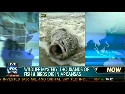 AR Wildlife Mysteries