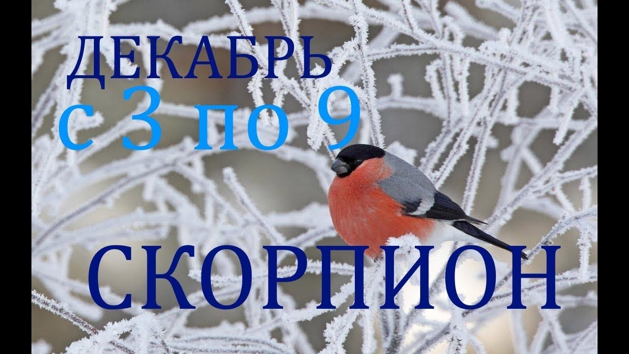 СКОРПИОН. ТАРО-ПРОГНОЗ на НЕДЕЛЮ с 3 по 9 ДЕКАБРЯ 2018г.