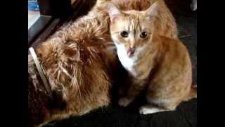 кот облизывает собаку