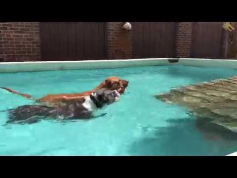 Training | CHEWY SWIMS | Solid K9 Training Dog Training