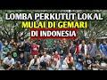 Lomba Perkutut Lokal Semakin Di Gemari Anak Muda Lomba Perkutut Lokal  Mp3 - Mp4 Download
