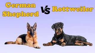Rottweiler VS German Shepherd Dog