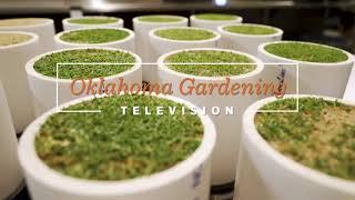 Oklahoma Gardening Episode #4711 (09/12/20)