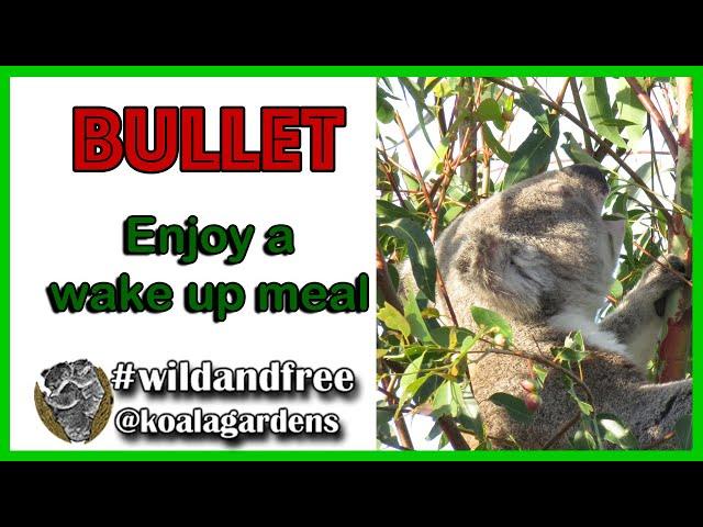 Bullet - enjoy a wake up meal