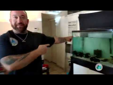 How To Water Change Your Aquarium/Fish Tank Properly!!