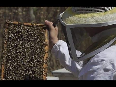 تراجع إنتاج العسل في غزة يؤثر على دخل مئات العائلات  - 12:54-2019 / 5 / 24