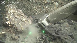 Canarie, a un mese dall'eruzione del vulcano la cenere sulla vita marina: le riprese subacquee