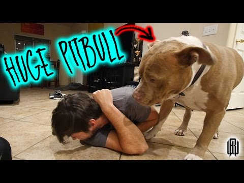 HE ATTACKED ME!!