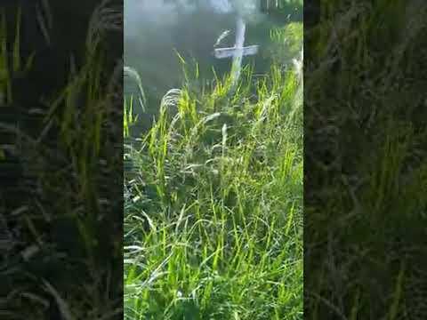 Imagens mostram mato alto no Cemitério Municipal de Ituberá