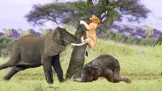 Epic Battle Mother Elephant vs Lion - Elephant Protect Calf From Pride Lion