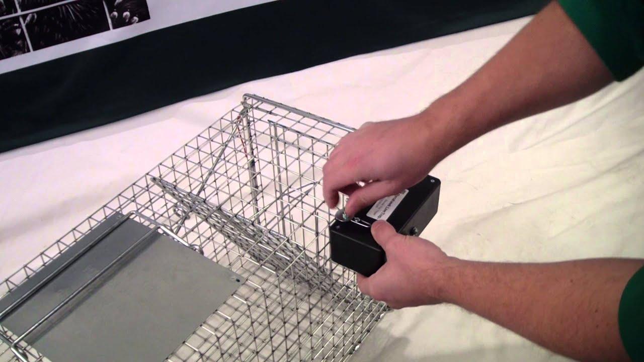 Remote Control Trap Trigger Youtube