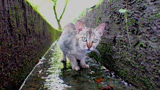 水の流れる溝の中に入って水を飲む野良猫