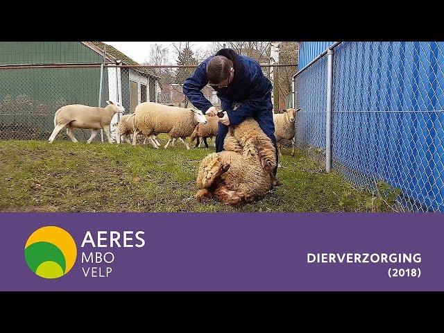 Aeres MBO Velp - Dierverzorging (2018)