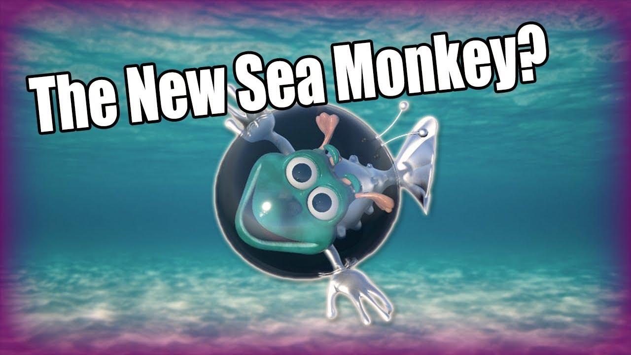 The New Sea Monkey? - Aqua Dragons