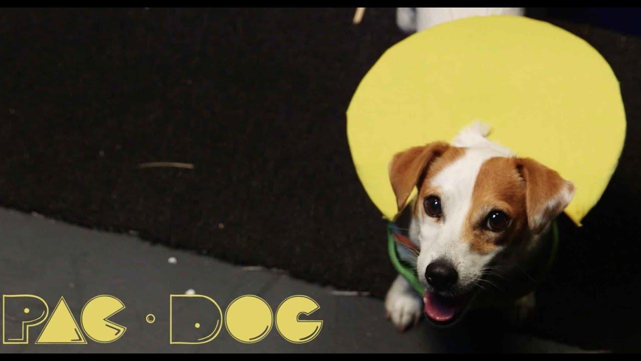Кучето кое игра Пак-ман во живо
